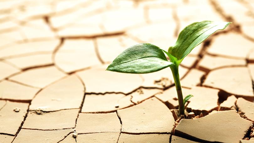 Renovando esperanças e atitudes